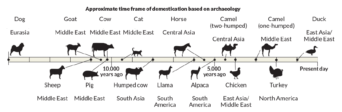 history and evolution of dogs Dogs were probably the first tame animals they have accompanied humans for some 10,000 years some scientists assert that all dogs, domestic and wild, share a common ancestor in the small south asian wolf.